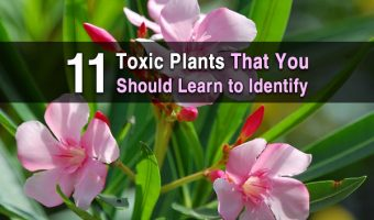 11 Toxic Plants That You Should Learn to Identify