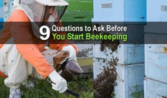 9 Questions to Ask Before You Start Beekeeping