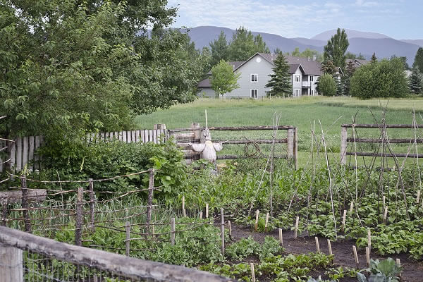 Homestead Garden