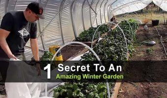 1 Secret To An Amazing Winter Garden