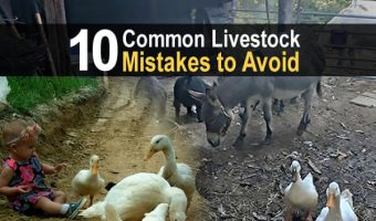 10 Common Livestock Mistakes to Avoid