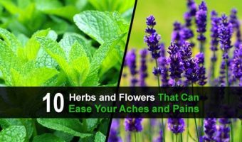 10 Herbs and Flowers That Can Ease Your Aches and Pains