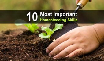 10 Most Important Homesteading Skills