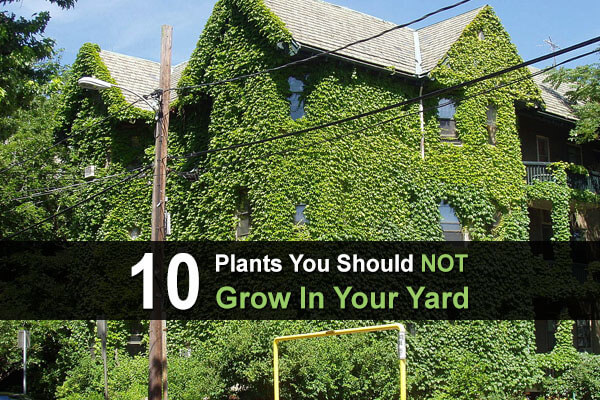10 Plants You Should NOT Grow In Your Yard