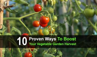 10 Proven Ways To Boost Your Vegetable Garden Harvest