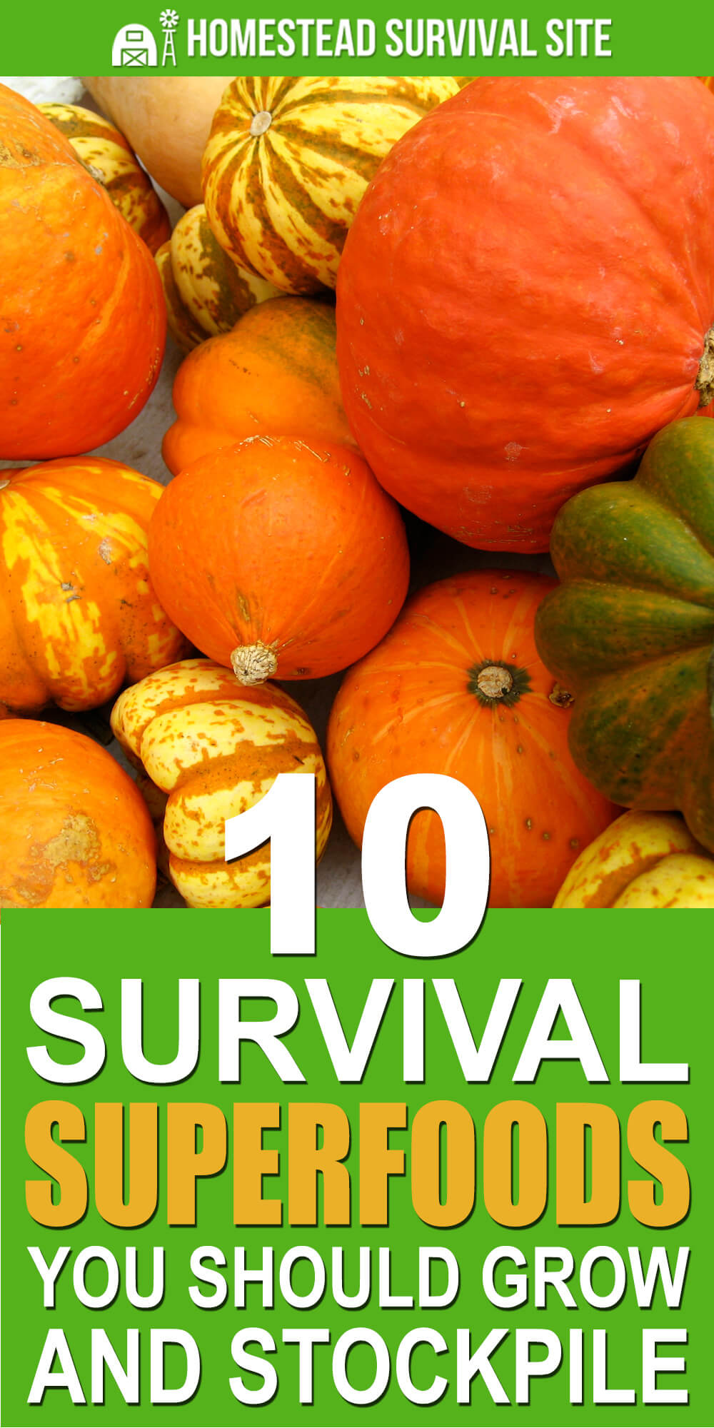 10 Survival Superfoods You Should Grow and Stockpile