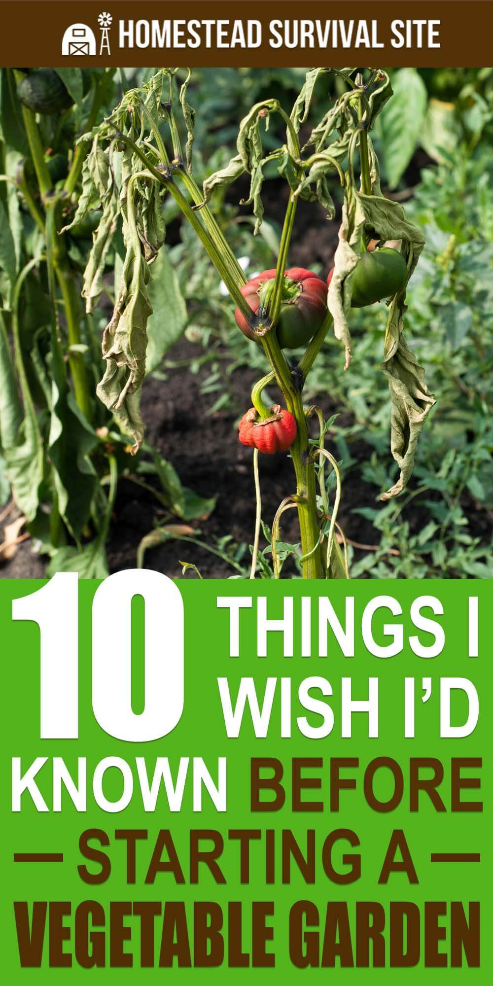 10 Things I Wish I'd Known Before Starting a Vegetable Garden