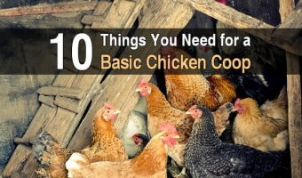 10 Things You Need for a Basic Chicken Coop