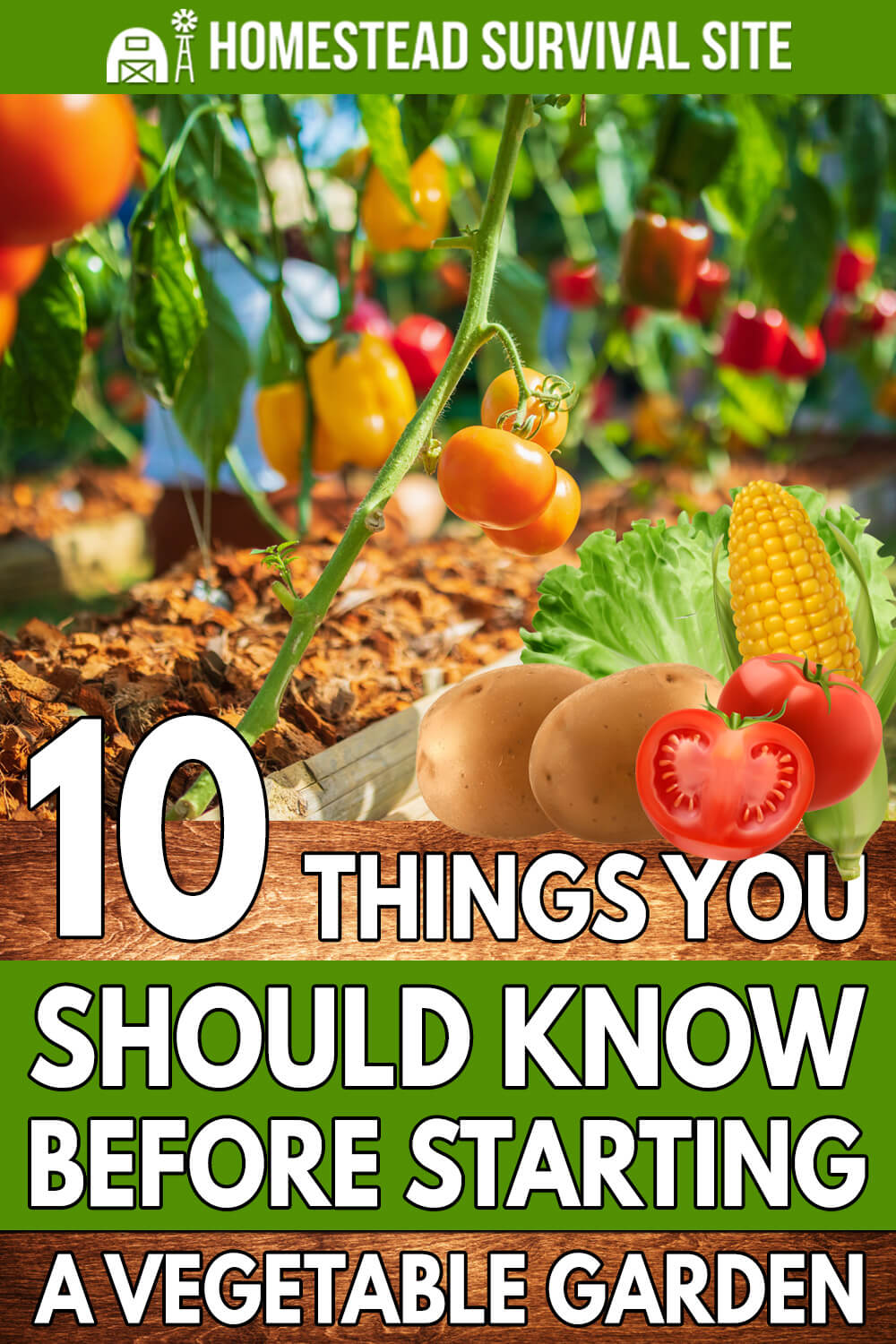 10 Things You Should Know Before Starting a Vegetable Garden