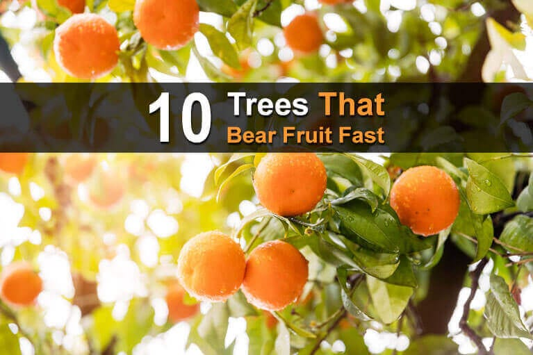 10 Trees That Bear Fruit Fast