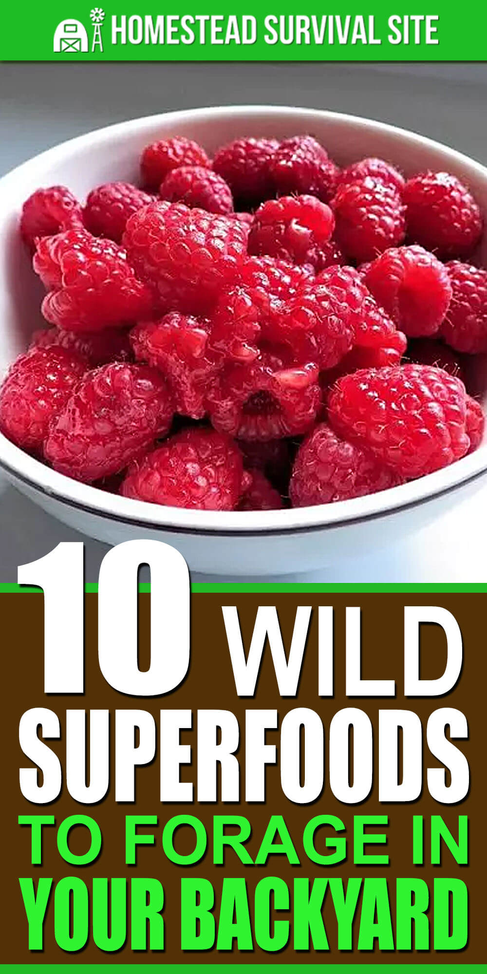 10 Wild Superfoods To Forage In Your Backyard