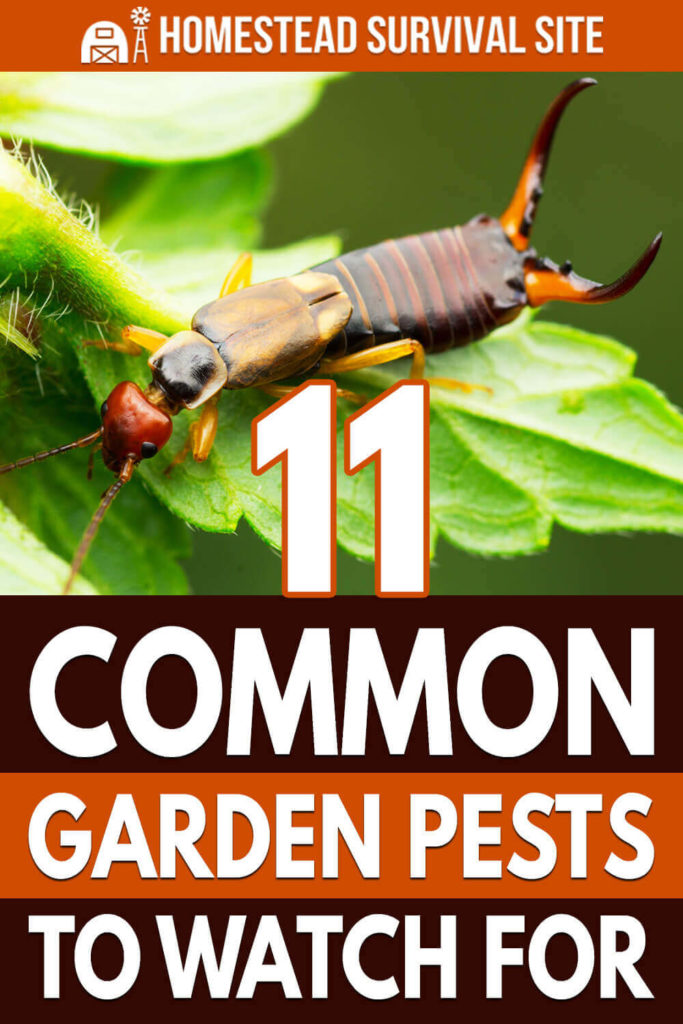 11 Common Garden Pests To Watch For