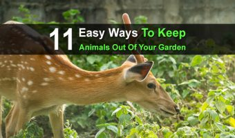 11 Easy Ways to Keep Animals Out Of Your Garden