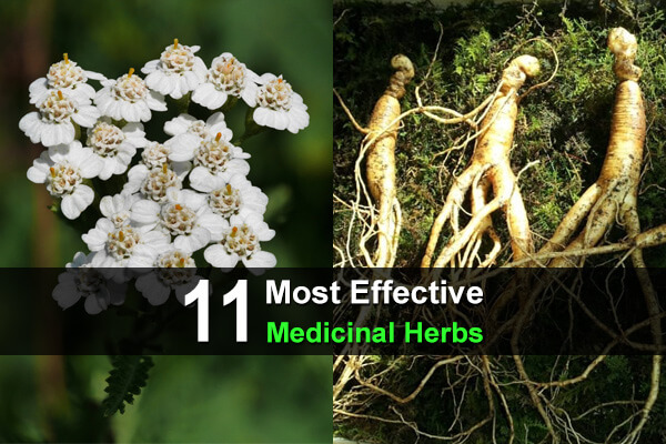 11 Most Effective Medicinal Herbs
