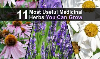 11 Most Useful Medicinal Herbs You Can Grow