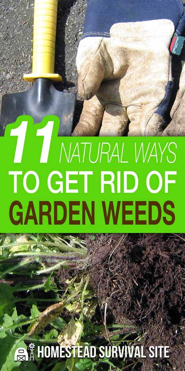 11 Natural Ways to Get Rid of Garden Weeds
