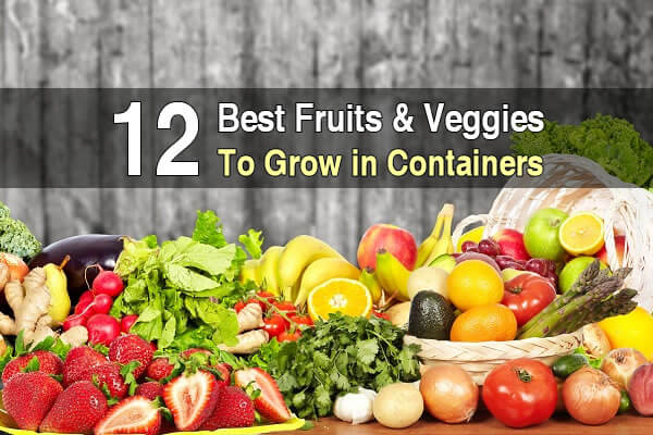 12 Best Fruits and Veggies to Grow in Containers