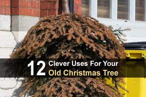 12 Clever Uses for Your Old Christmas Tree