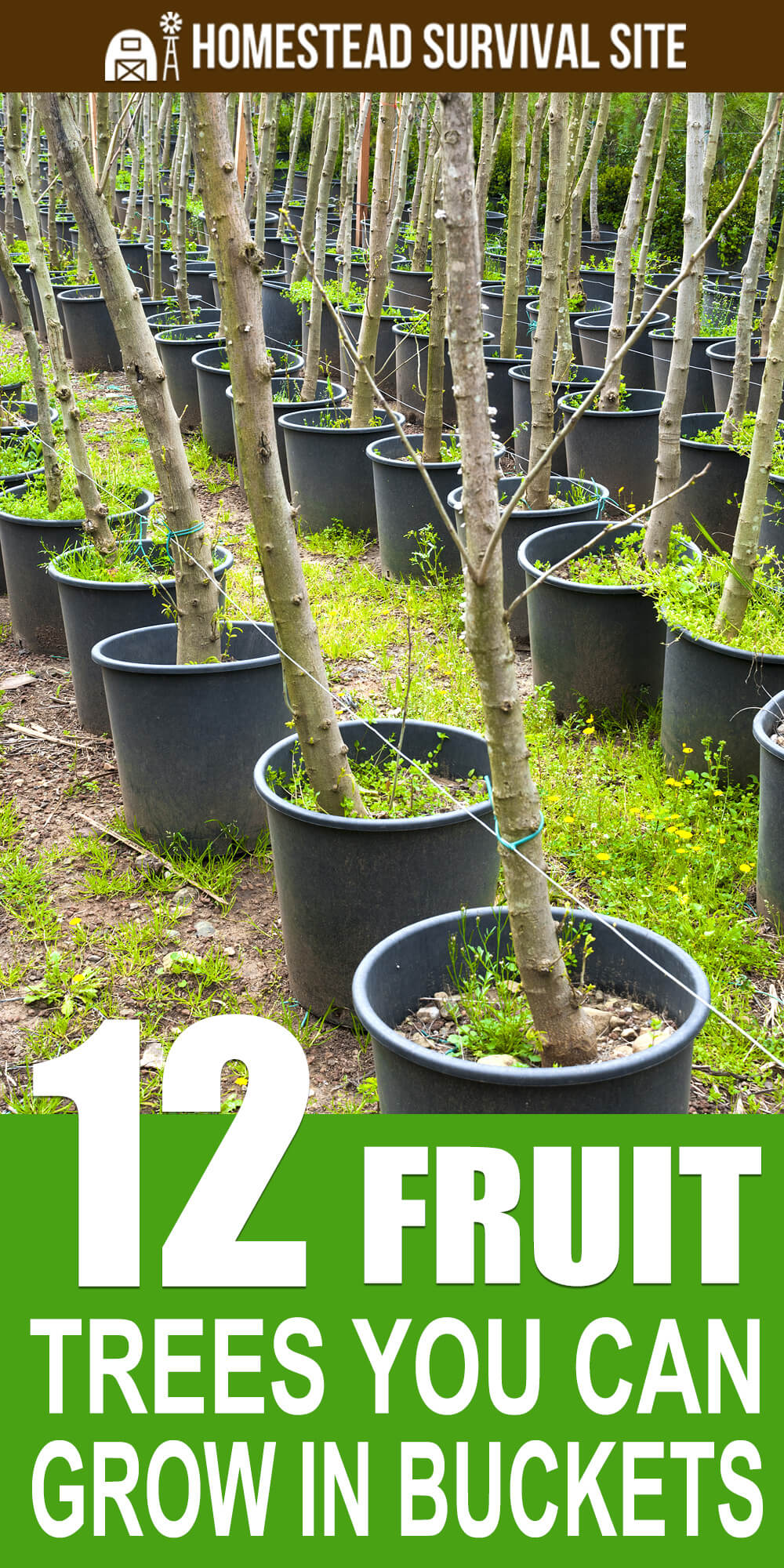 12 Fruit Trees You Can Grow In Buckets