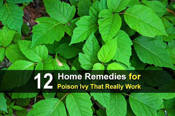 12 Home Remedies for Poison Ivy That Really Work