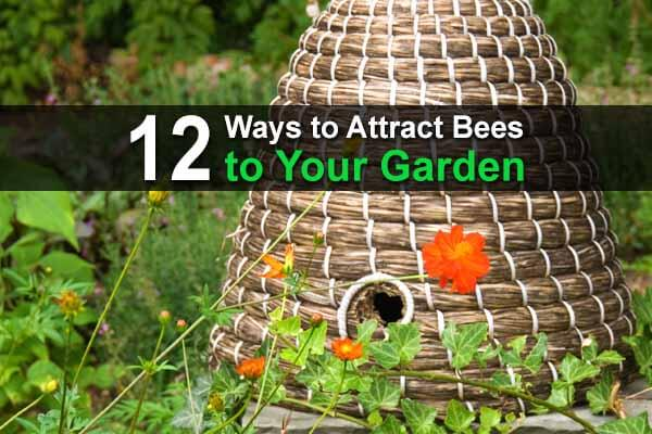 12 Ways to Attract Bees to Your Garden