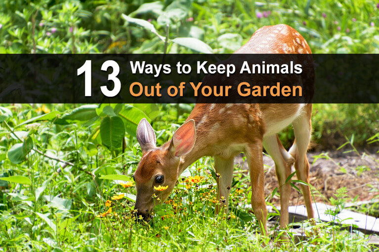 13 Ways to Keep Animals Out of Your Garden