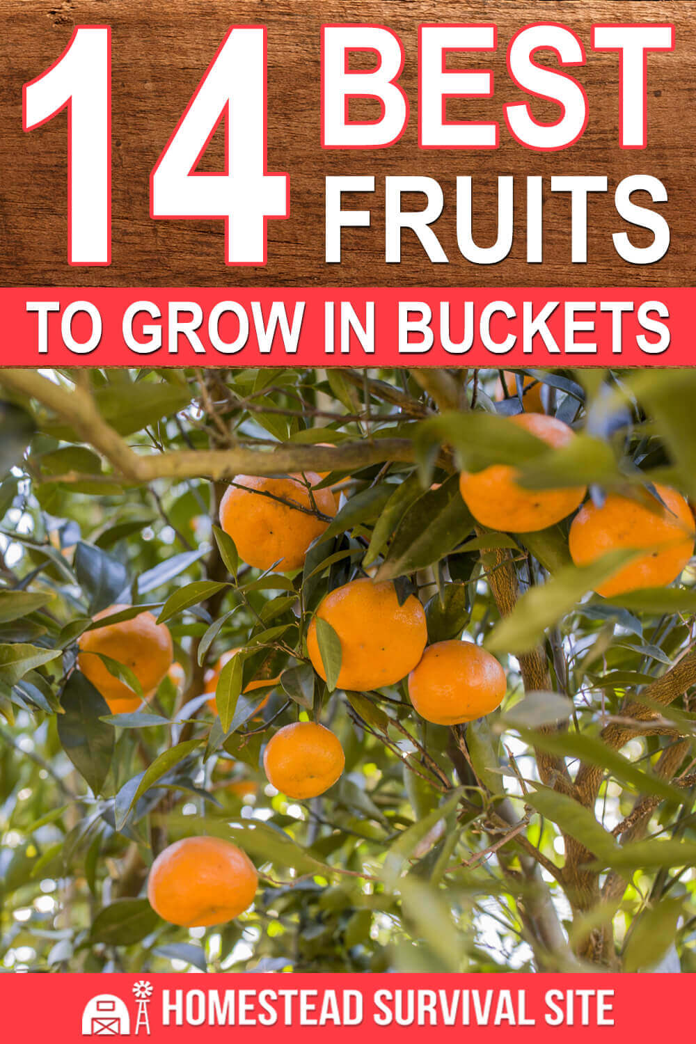 14 Best Fruits to Grow in Buckets