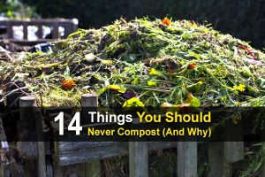 14 Things You Should Never Compost (And Why)