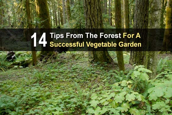 14 Tips From The Forest For A Successful Vegetable Garden