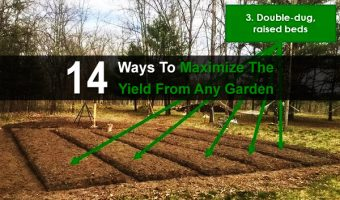 14 Ways To Maximize The Yield From Any Garden