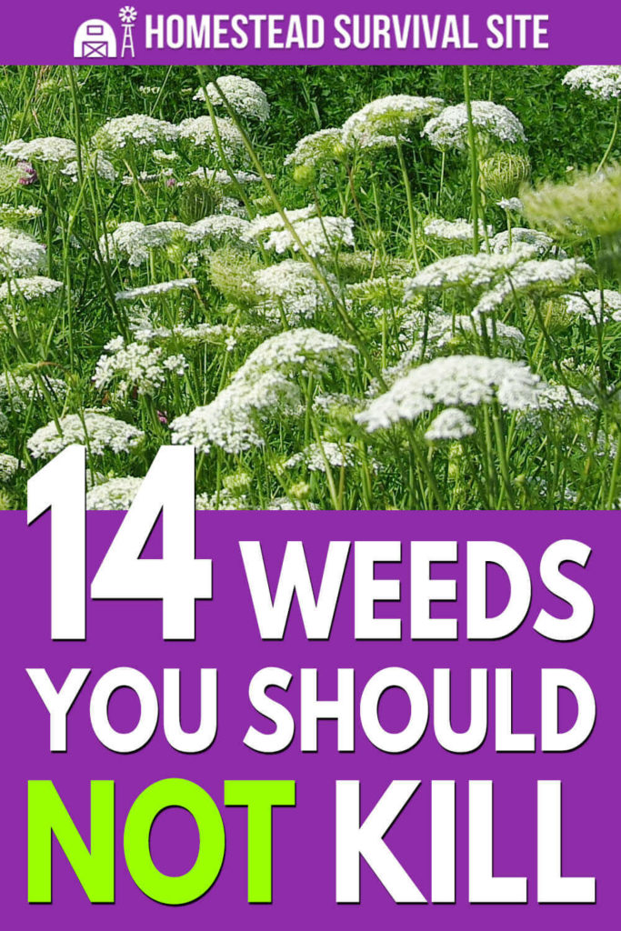 14 Weeds You Should NOT Kill