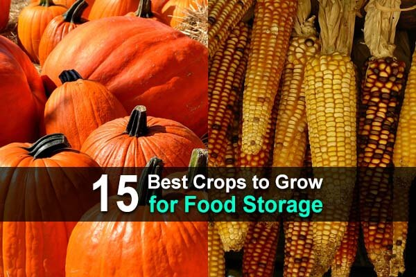 15 Best Crops to Grow for Food Storage
