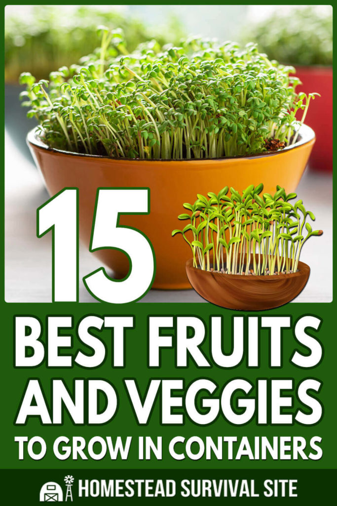 15 Best Fruits and Veggies for Your Container Garden
