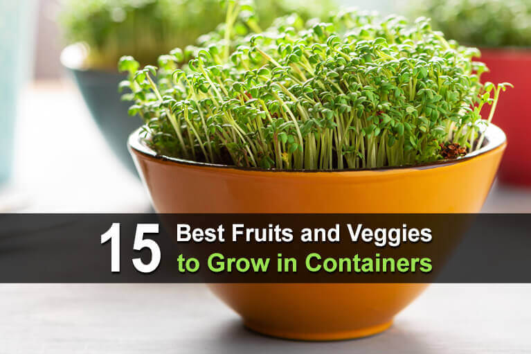 15 Best Fruits and Veggies to Grow in Containers