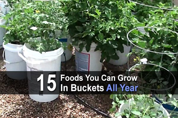 15 Foods You Can Grow In Buckets All Year