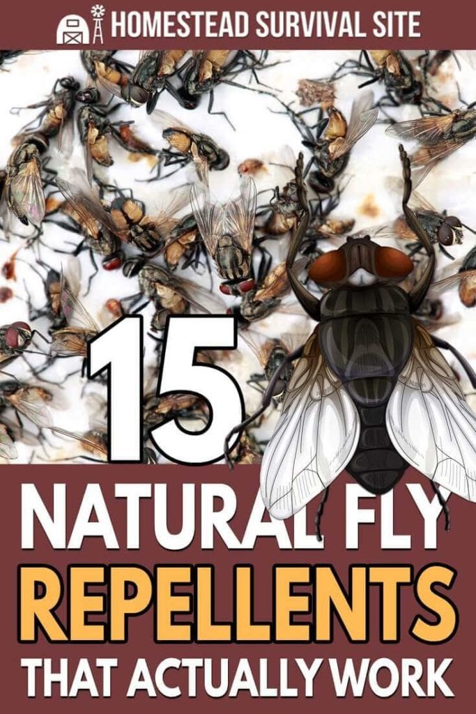 15 Natural Fly Traps and Repellents That Actually Work