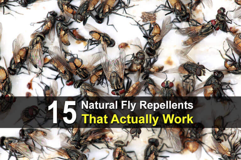 15 Natural Fly Repellents That Actually Work