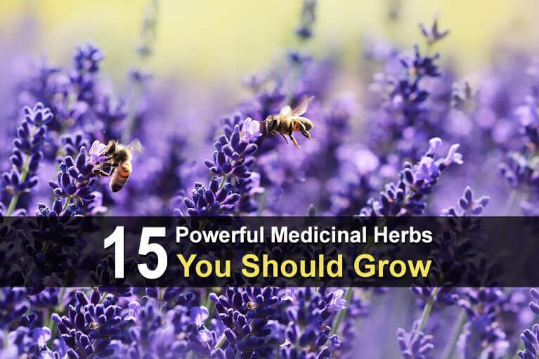 15 Powerful Medicinal Herbs You Should Grow