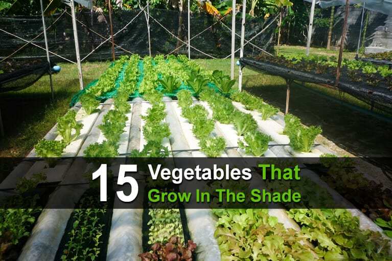 15 Vegetables That Grow In The Shade