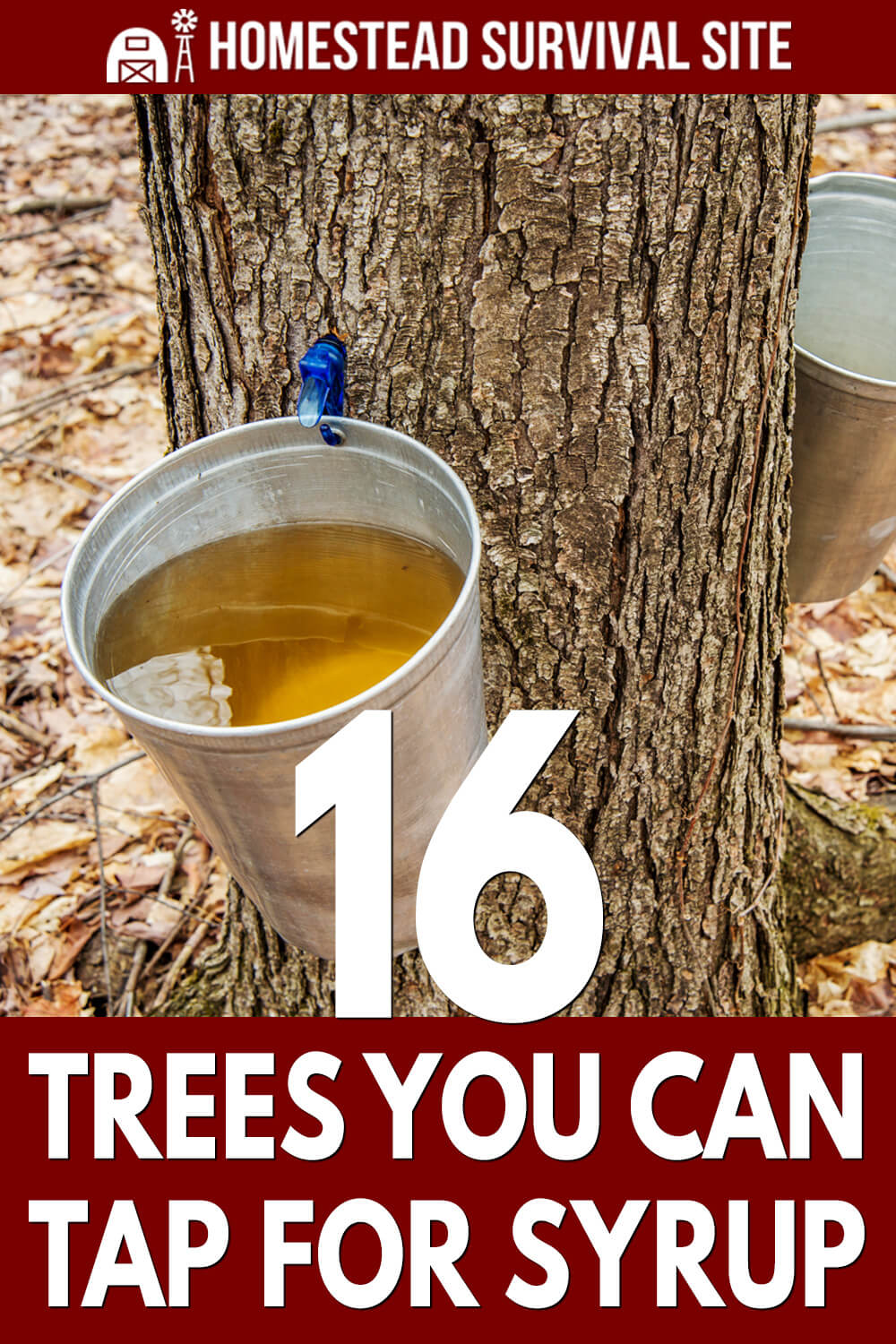 16 Trees You Can Tap for Syrup