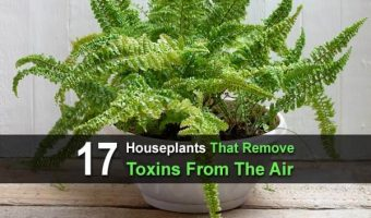 17 Houseplants That Remove Toxins From The Air