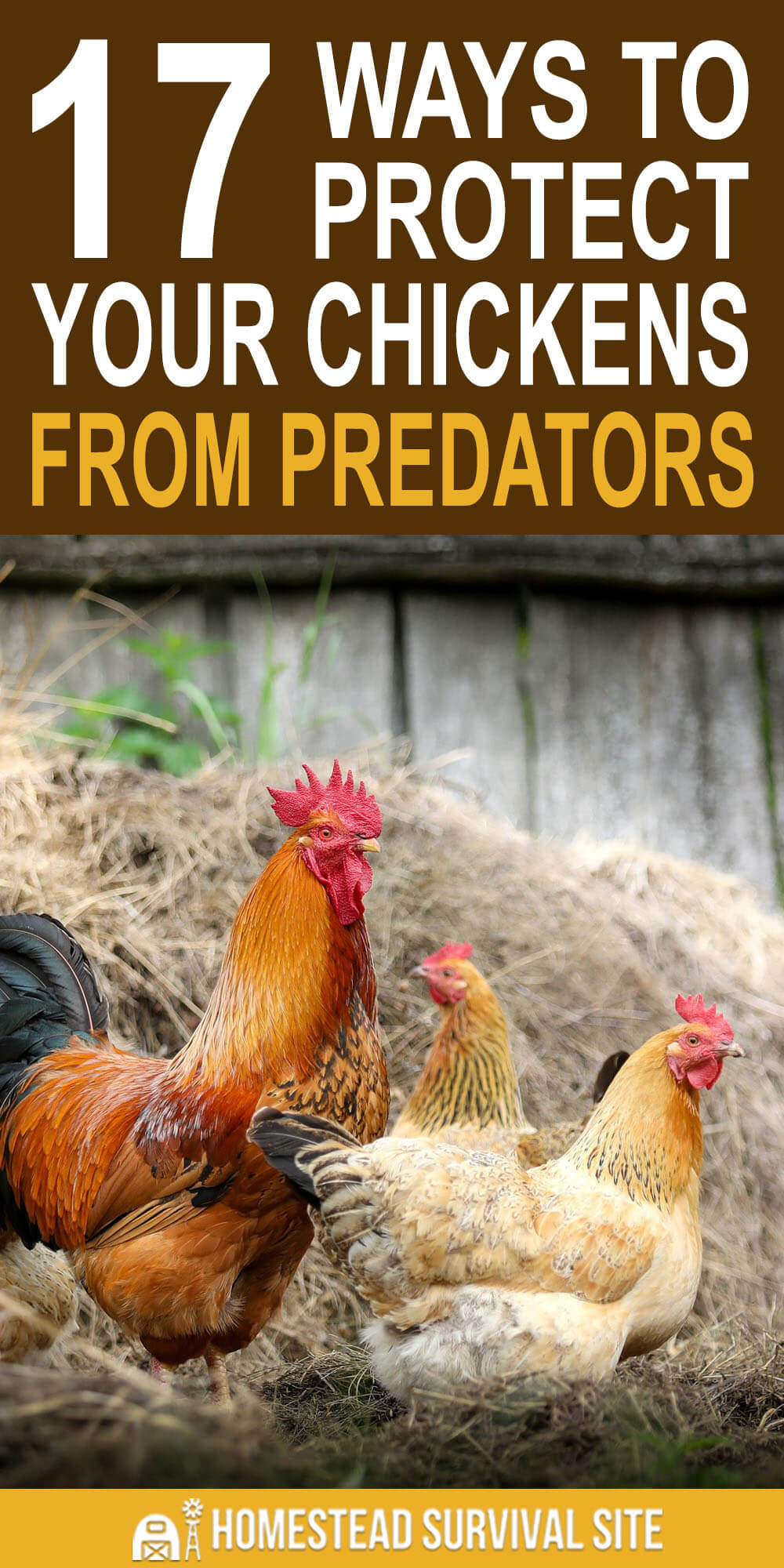17 Ways To Protect Your Chickens From Predators