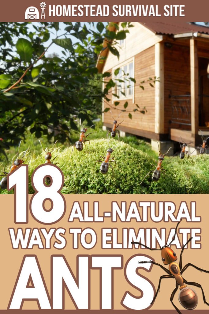 18 All-Natural Ways to Eliminate Ants
