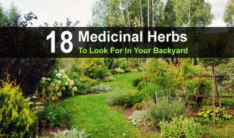 18 Medicinal Herbs To Look For In Your Backyard
