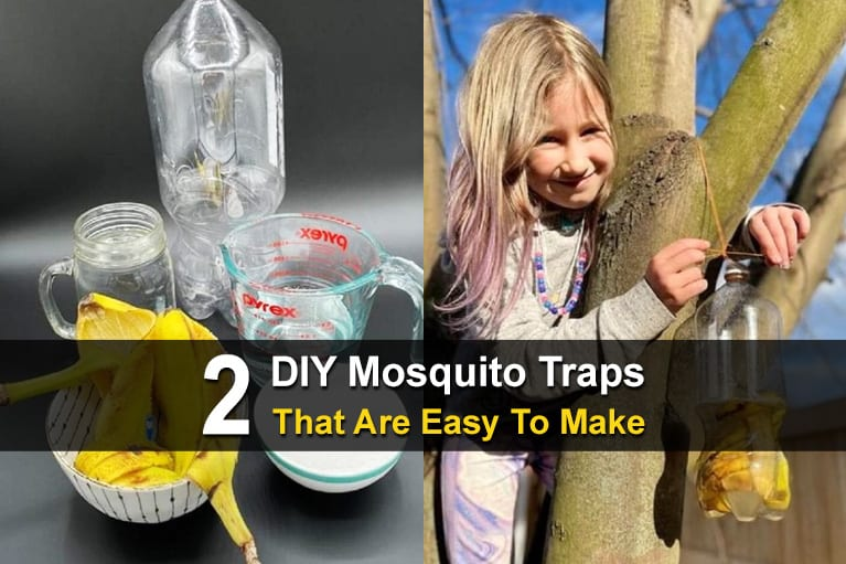 2 DIY Mosquito Traps That Are Easy To Make