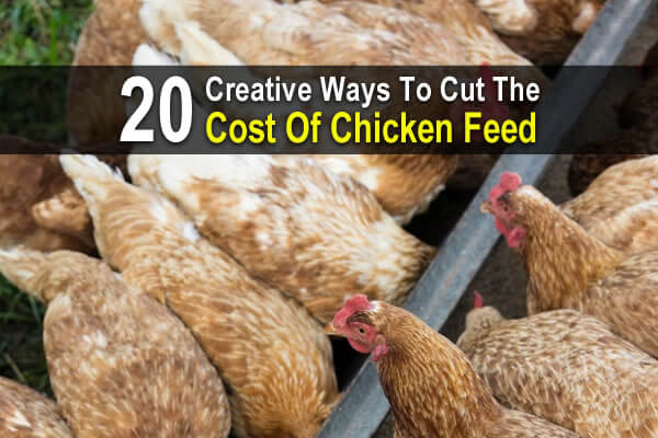 20 Creative Ways to Cut the Cost of Chicken Feed