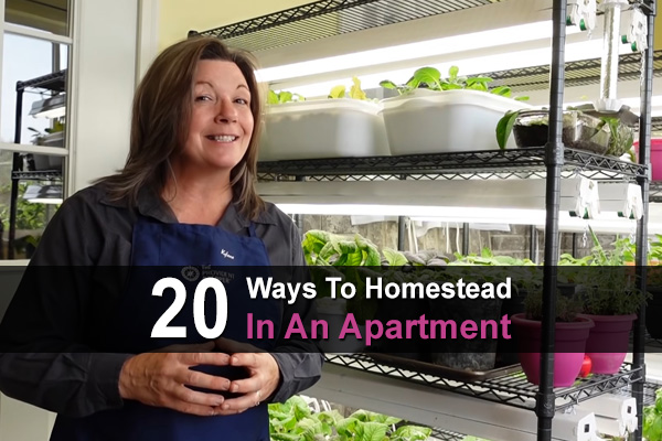 20 Ways To Homestead In An Apartment