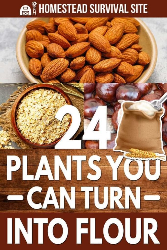 24 Plants You Can Turn Into Flour