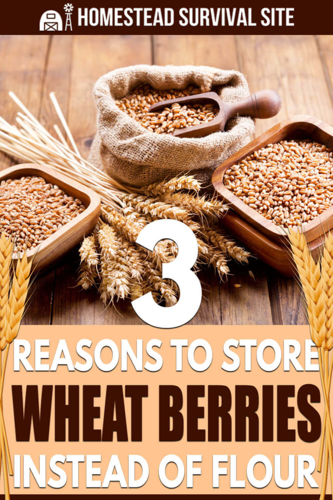 3 Reasons To Store Wheat Berries Instead of Flour