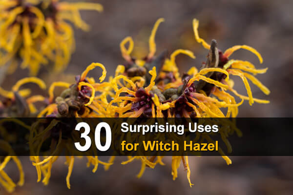 30 Surprising Uses for Witch Hazel